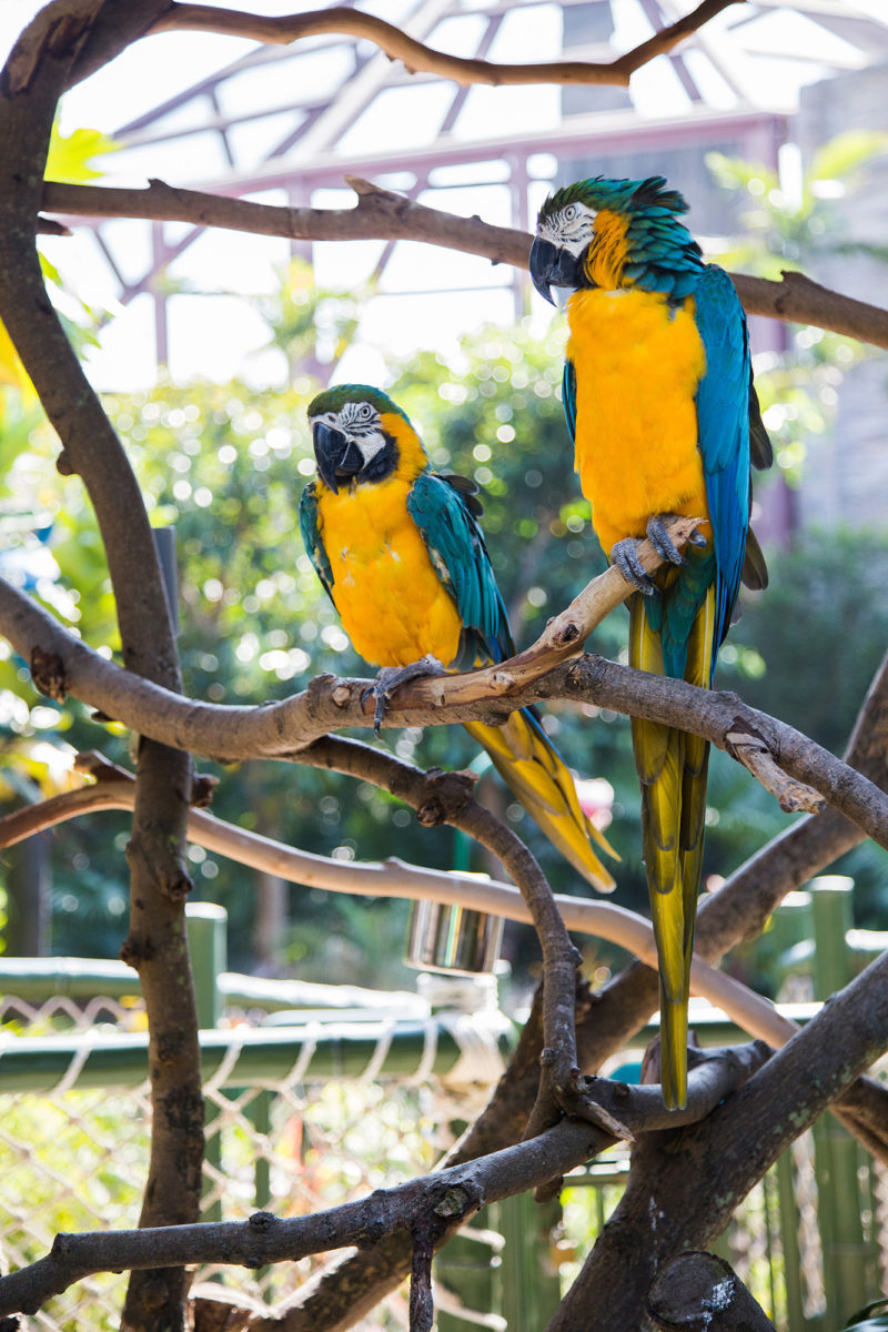 Just some parrots hangin' around. I was kinda hoping they'd curse at us in Canto.