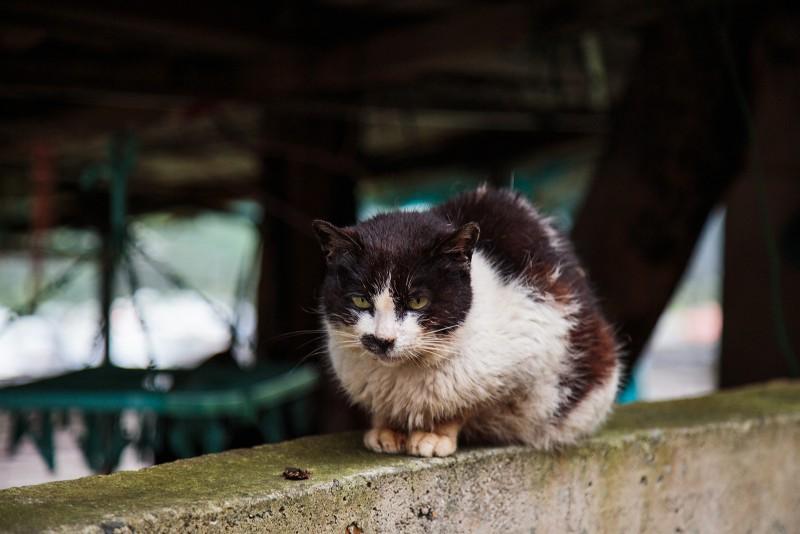 Cat-stache